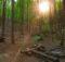 Das Abenteuer wartet - Erfahrungen mit Trekking Pfalz