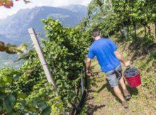 Junge Winzer, kreative Weine und Herbstbräuche mal anders