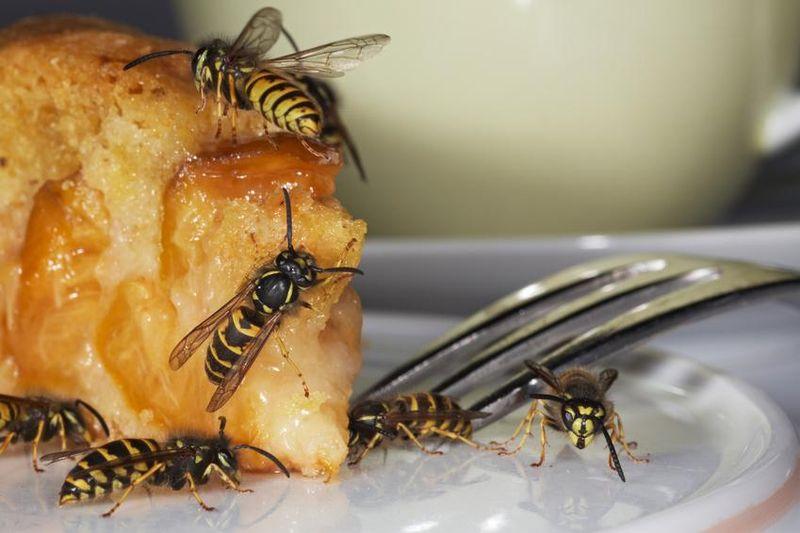 Wespenstiche sind zwar meist harmlos, für Allergiker können sie aber lebensbedrohlich werden