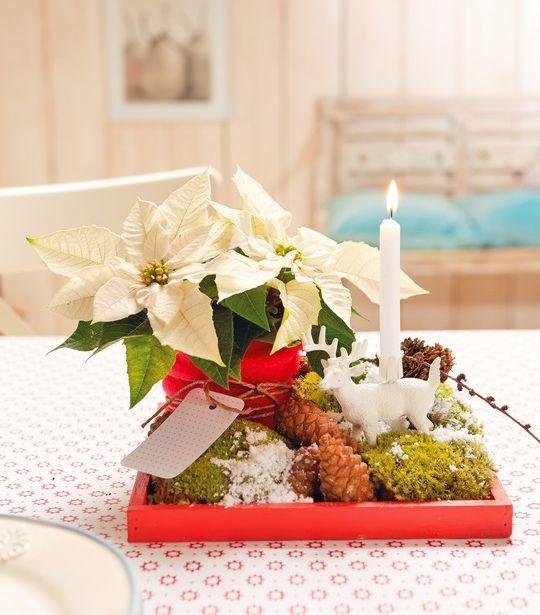 Winter-Arrangement mit weißen Mini-Weihnachtssternen