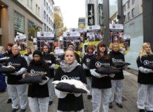Bundesweite Anti-Pelz-Kampagne des Deutschen Tierschutzbüros