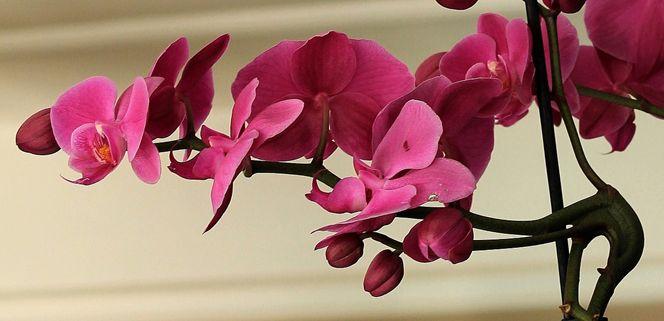 Besonders Orchideen erfreuen mit blumiger Farbenpracht