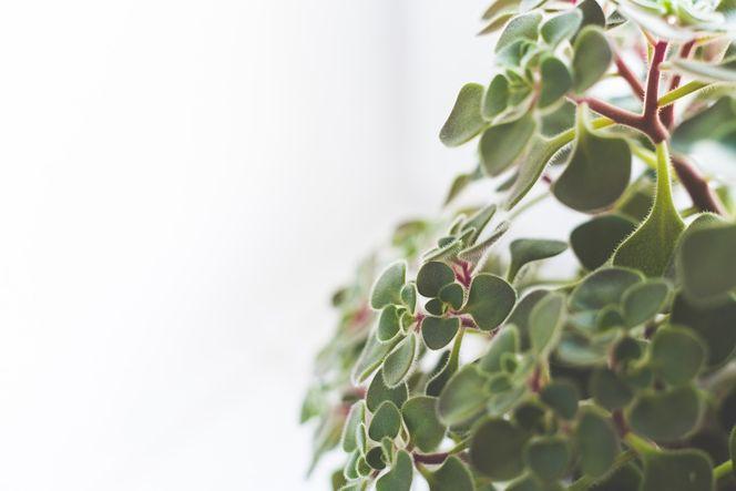 Selbstredend sind Zimmerpflanzen ein Muss