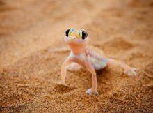 Auf der Suche nach den Little Five der Namib