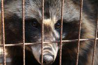 Nach Recherchen des Deutschen Tierschutzbüros e.V. verkauft Breuninger Pelze, die von Hunden stammen