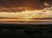 Sunrise über der Steppe Kenias