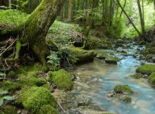 Haubers Naturresort Klimapfad
