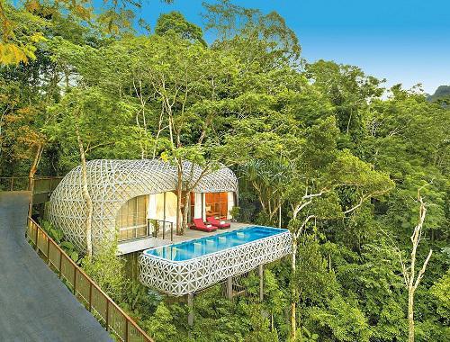 Erholung in den Baumwipfeln von Phuket