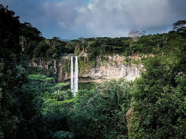 Die Big Five des Dschungels