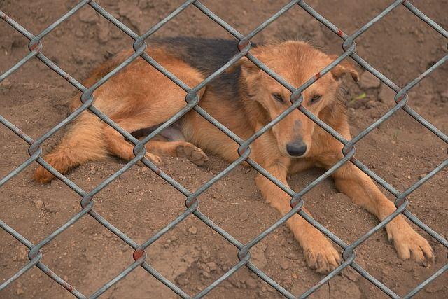 Auch Hundefelle werden oft verwendet