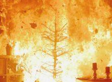 Wenn ein trockener Tannenbaum in Brand gerät, breiten sich die Flammen rasend schnell aus