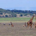 Geheimtipp Ruanda: Berggorillas und Big Five im Akagera Nationalpark