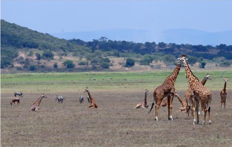Afrika-Geheimtipp Ruanda