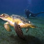 Traumurlaub Tauchsafari: Hotspots Rotes Meer und Malediven
