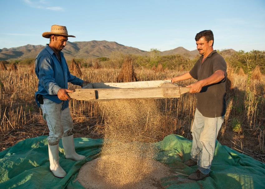 """Bio-Sesamöl ist ein unverzichtbarer Bestandteil zahlreicher Weleda Körperpflegeprodukte. Die Mehrheit des Gesamtbedarfs an Bio-Sesamöl bezieht Weleda aus dem Süden Mexikos, wo das Unternehmen eine langfristige Partnerschaft mit dem lokalen Familien-Unternehmen """"Sesajal"""" pflegt."""