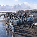 Reisetrend: Expeditions-Kreuzfahrten in die Arktis und Antarktis