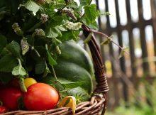 Herbstzeit ist Erntezeit