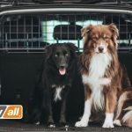 Elektroautos: Hundegitter für spezielle Fahrzeuge