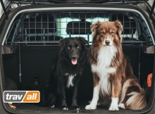 Mit einem Trenngitter sind Hunde auch im Elektroauto optimal gesichert.