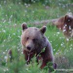 Artenschutz und Naturtouren: Der Naturreiseveranstalter Perlenfänger bietet Reisen ohne Reue