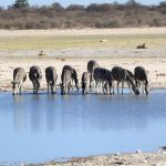 Wie eine Safari mehr wird, als nur ein Urlaubserlebnis – mit Video