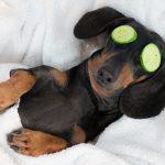 Urlaub mit dem Haustier: Hundefreundliche Hotels gesucht?