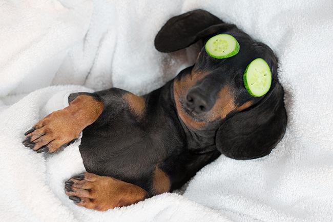 """Das Paket """"Paws in Paradise"""" verspricht ein exklusives Wellnessprogramm für Hunde"""