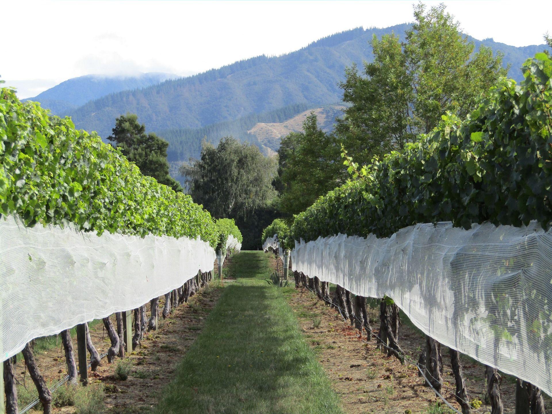 Einer von den vielen Weingärten Neuseelands
