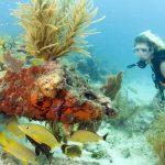 Der Florida Keys National Marine Sanctuary bietet Tauchabenteuer vom Feinsten