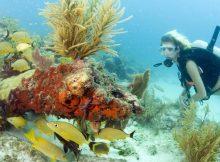 auchen vor Key Largo (c) Bob Care Florida Keys News Bureau