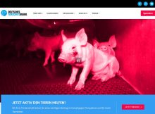 Screenshot Website Tierschutzbüro
