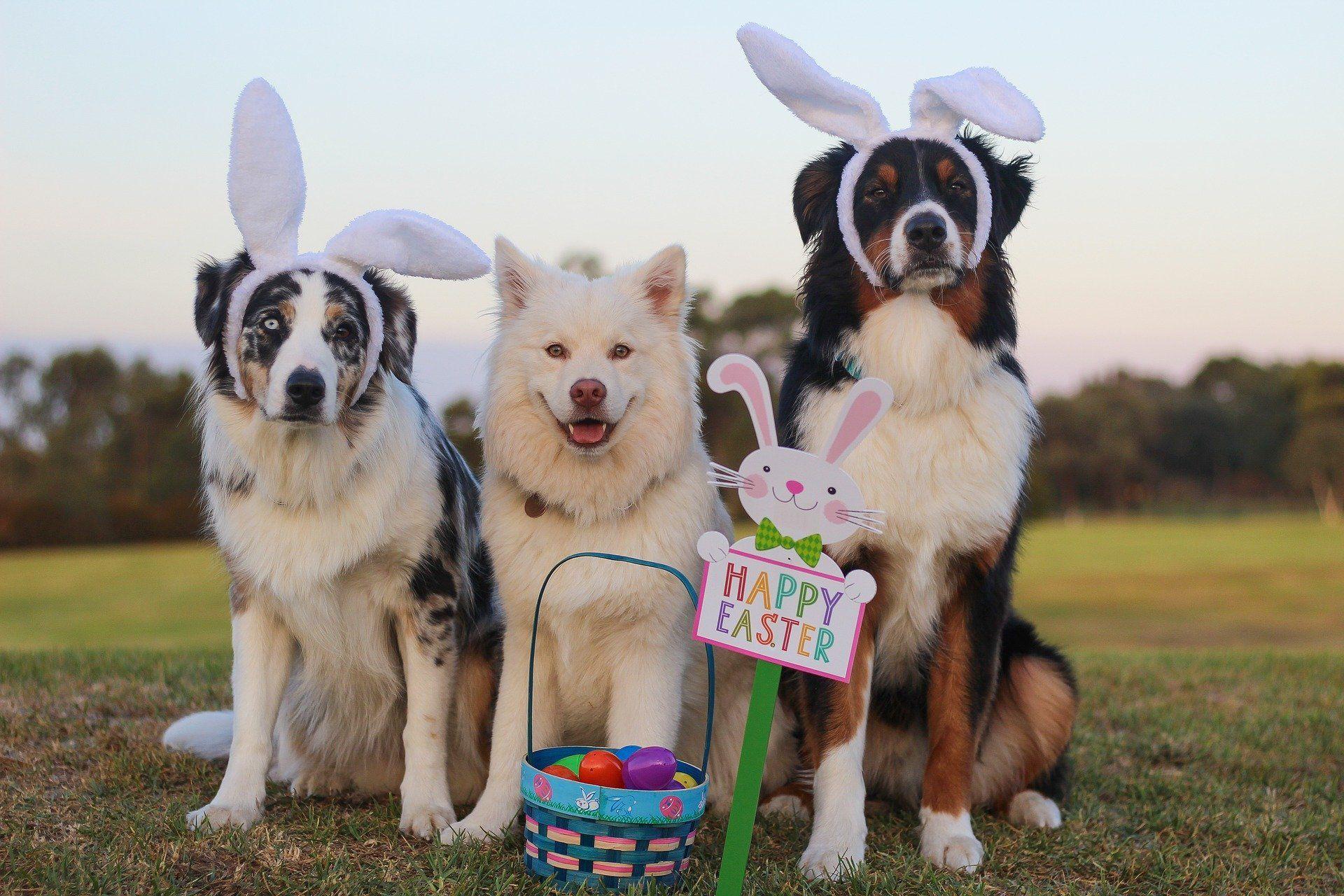 Alle hoffen auf ein sonniges Osterfest