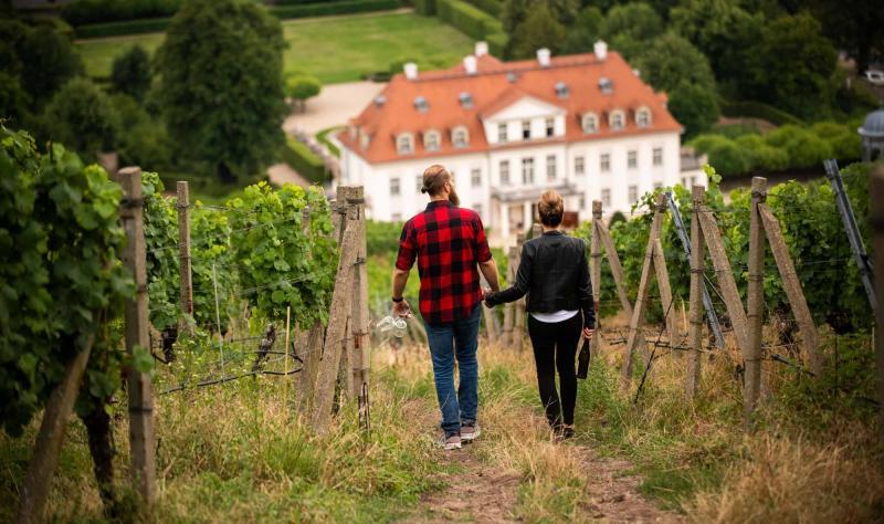 Spaziergang durch die Weinberge zum Schloss Wackerbarth. Foto: Martin Förster (DML-BY)