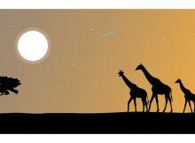 Afrika von seiner schönsten Seite