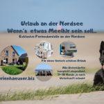 Urlaubstipps für Hundebesitzer: Ratschläge und Feriendomizile an der Nordsee