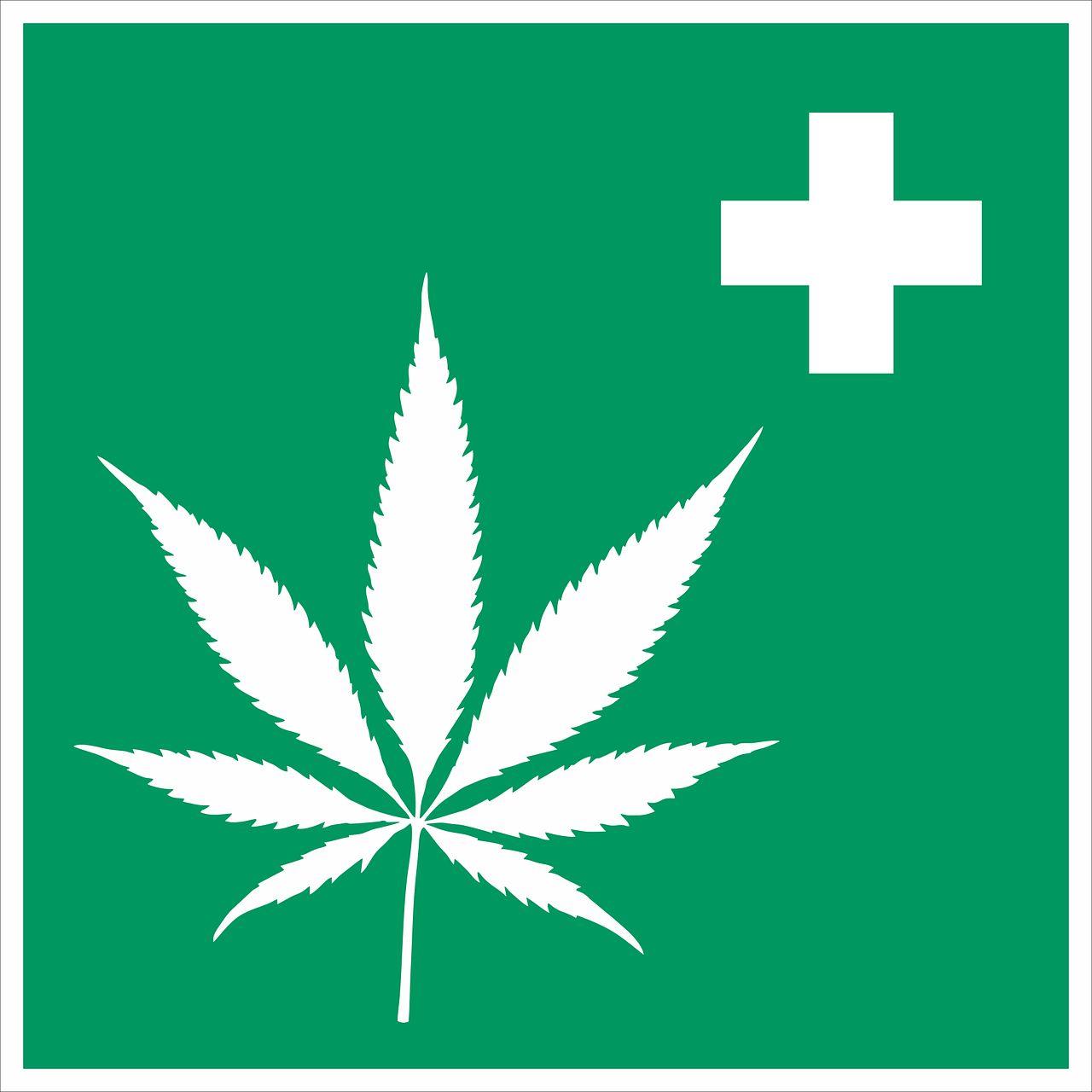Vielfältige Anwendungsmöglichkeiten für medizischen Hanf