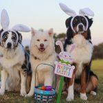 Bunte kreative Ideen für ein Happy Easter Fest