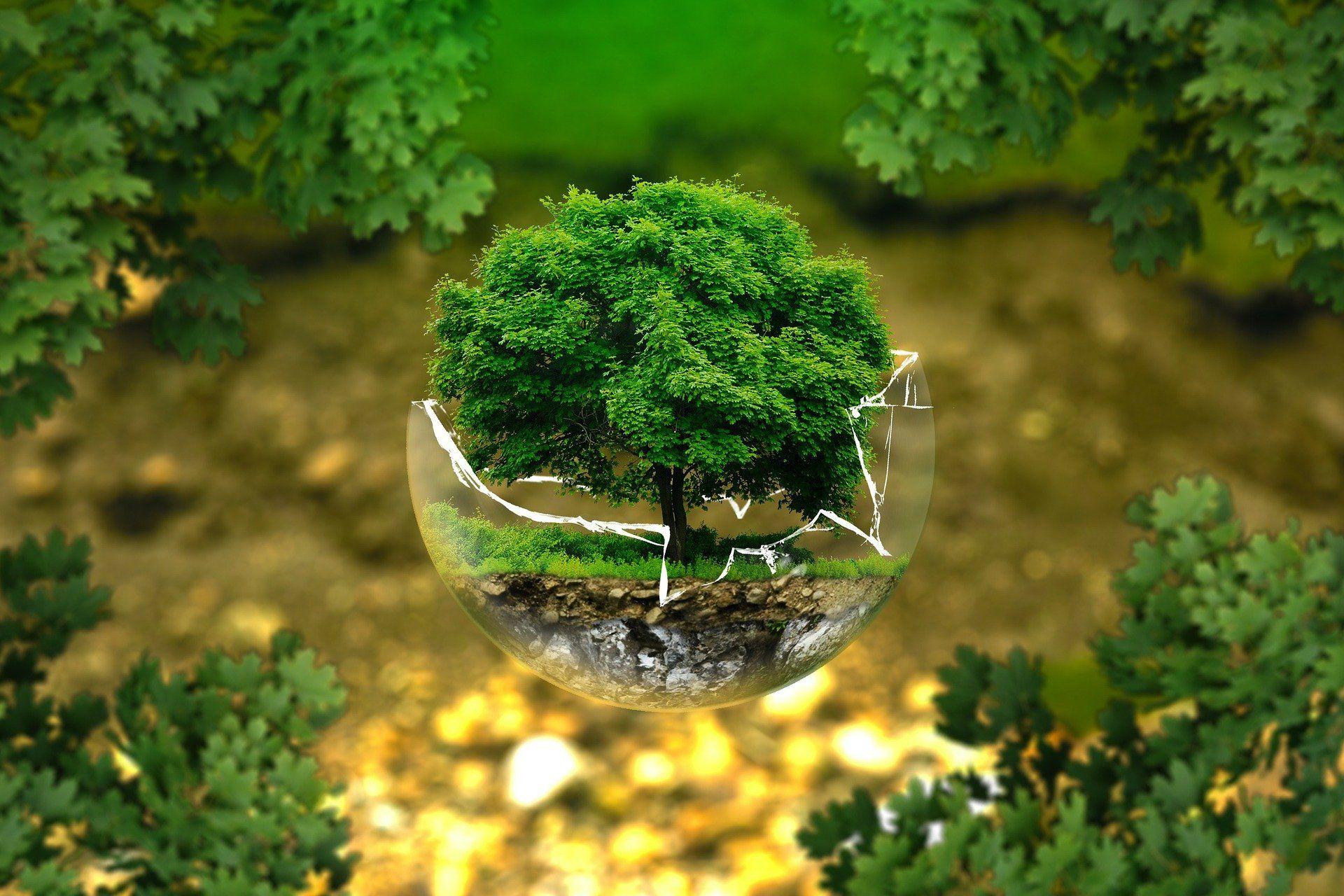 Umweltschutz und Nachhaltigkeit im Fokus