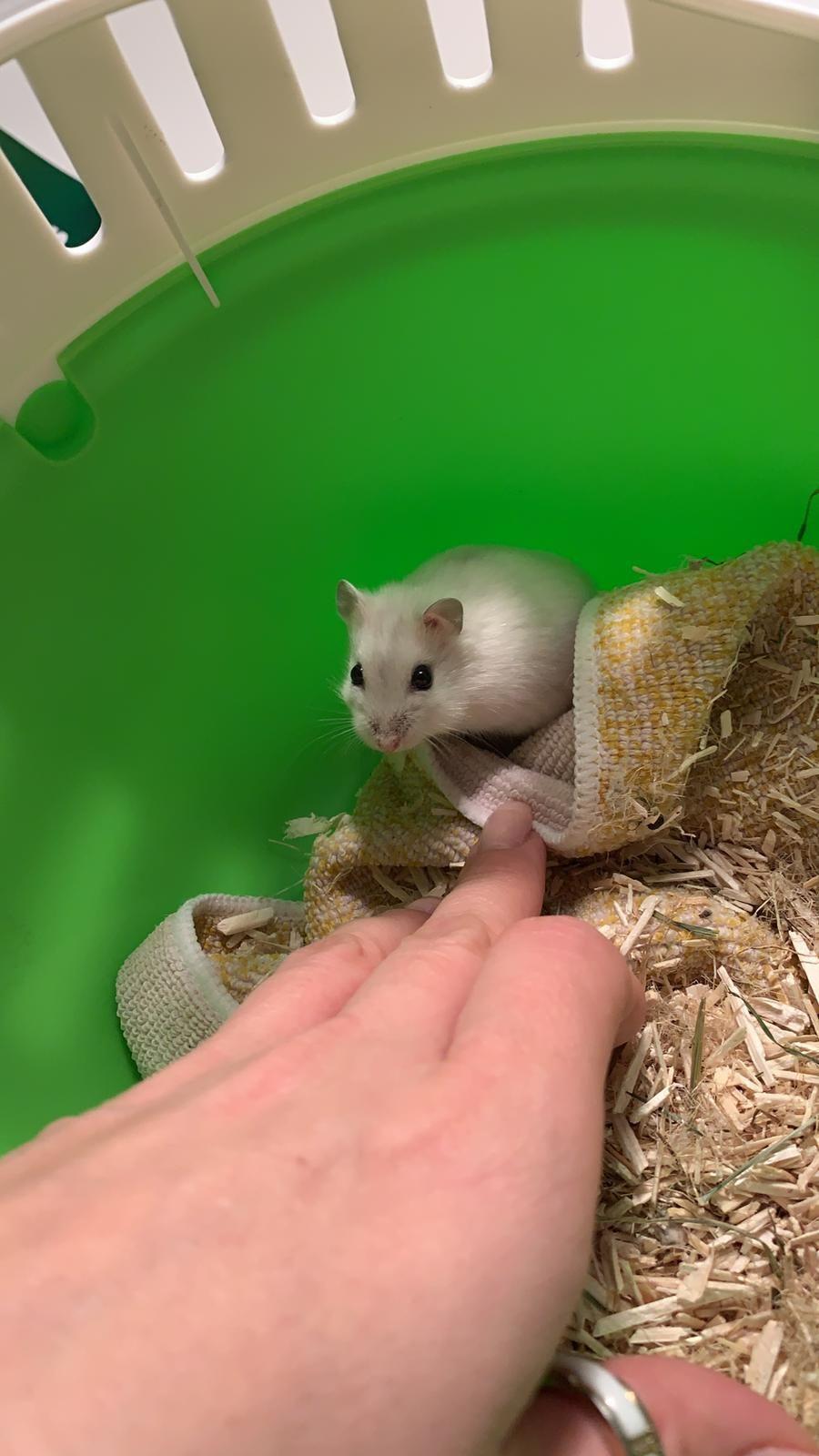 Auch süsse kleine Nager wie der Hamster erfreuen sich grosser Beliebheit