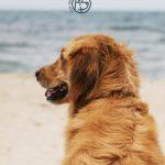 Ferienwohnung gesucht: Mit Hund zum Kurzurlaub ans Meer