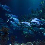 Geheimnisvolle Unterwasserwelt einfach selbst entdecken