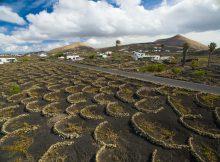 Weinanbau auf Lanzarote