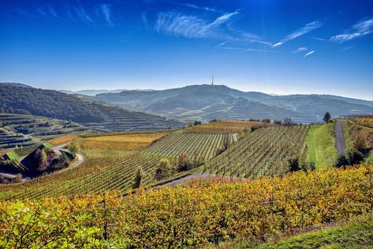 Weinterrassen in der Region Kaiserstuhl