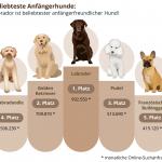 Tipp: Welches sind die beliebtesten Anfängerhunde?