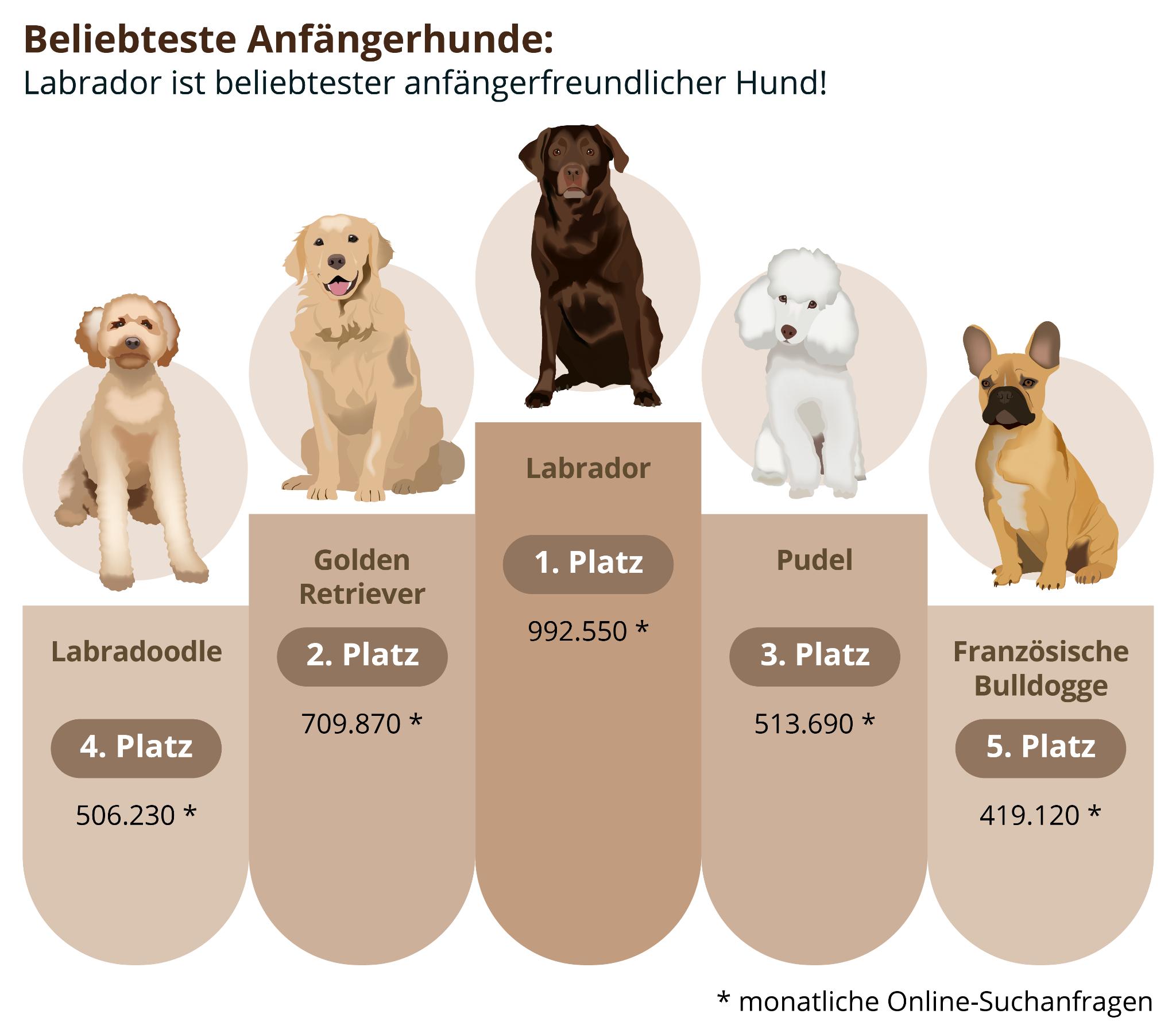 Top 5 der beliebtesten Anfängerhunde